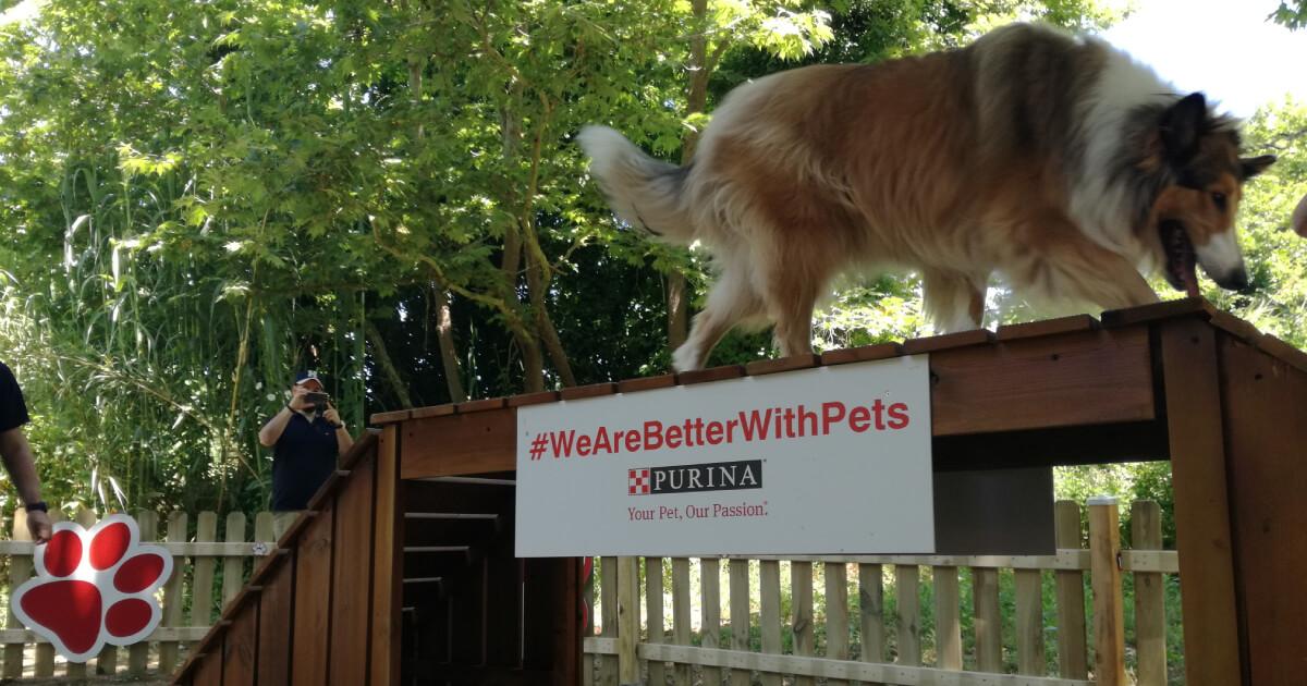 #WeAreBetterWithPets Weekend by PURINA