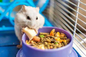 Οι τάσεις του κλάδου στα προϊόντα διατροφής και τα αξεσουάρ για τα μικρά ζώα συντροφιάς!