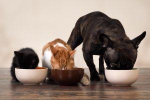 Διατροφή που προστατεύει την υγεία των ζώων συντροφιάς