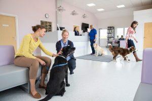 Ικανοποίηση πελατών από κτηνιατρικές υπηρεσίες στα ζώα συντροφιάς στην Ελλάδα
