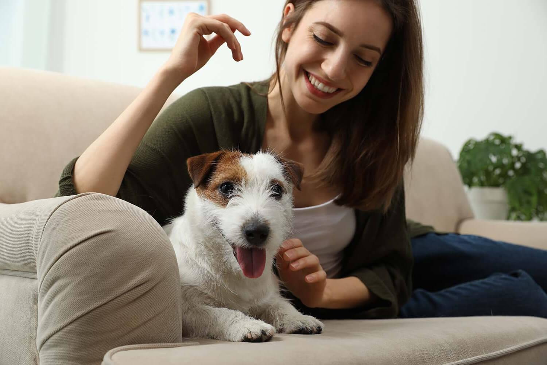 Συμπεριφορά και συνειδητότητα φροντίδας ζώων συντροφιάς